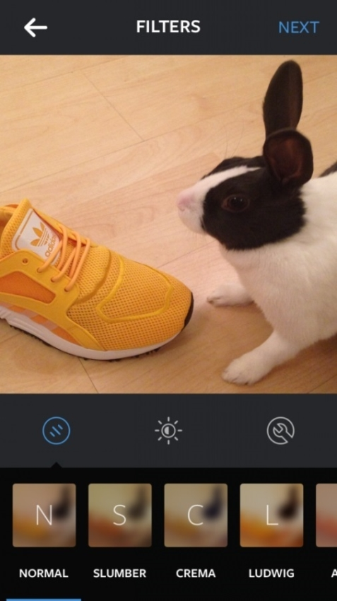 black and white bunny rabbit with a yellow adidas shoe
