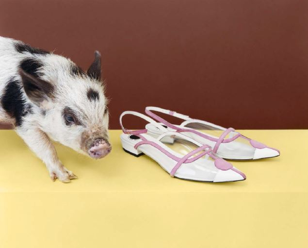 ashley-williams-red-or-dead-collaboration-cute-pig-with-pink-and-white-leather-shoes